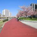 写真: 千住汐入大橋