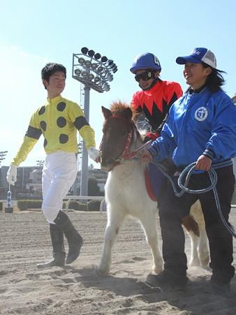 120219ポニーレースin川崎-本馬場入場-4番コダマ号と米倉知騎手-01