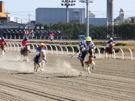 120219ポニーレースin川崎-レース-05