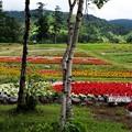 山麓駅のお花畑