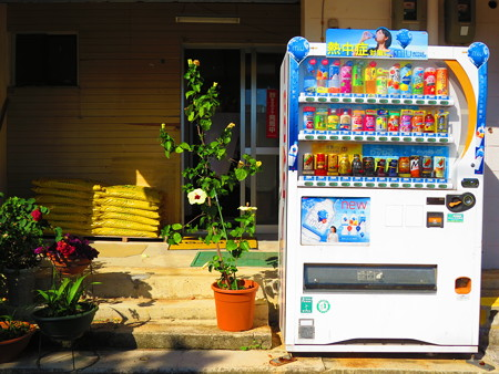 ハイビスカス自販機