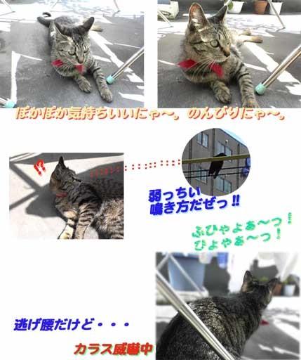 2005/5/4-にゃごやな一日~その2