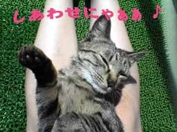 2005/5/21-2【猫写真】天敵再び!