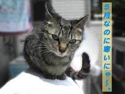 2005/5/14-1【猫写真】さむいにゃぁ~