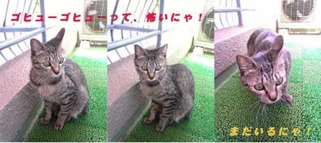 2005/5/16-2【猫写真】天敵現る!!