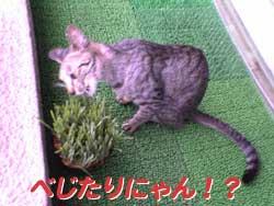 2005/7/30【猫写真】べじたりにゃん!