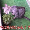 Photos: 2005/7/30【猫写真】べじたりにゃん!