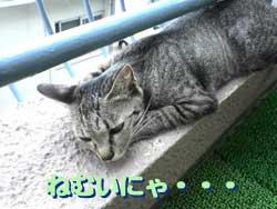 2005/7/22【猫写真】ねむいにゃ・・・