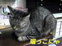 Photos: 2005/7/5【猫写真】端っこにゃ