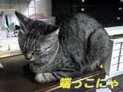 2005/7/5【猫写真】端っこにゃ