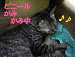 2005/7/15【猫写真】かみかみちぅ