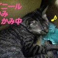 Photos: 2005/7/15【猫写真】かみかみちぅ