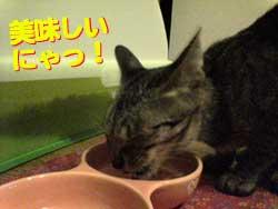 2005/7/23【猫写真】美味しいにゃ!