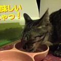 Photos: 2005/7/23【猫写真】美味しいにゃ!
