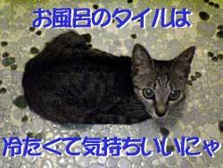 2005/7/19【猫写真】タイルは気持ちいいにゃ!