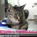 Photos: 2005/7/3【猫写真】日曜日はお休みにゃ~