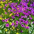 One last summer flowers...