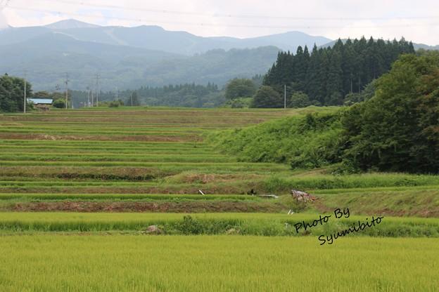 棚田 (山形県上山市)