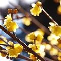 輝く花弁?