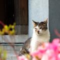 Photos: 猫宮司