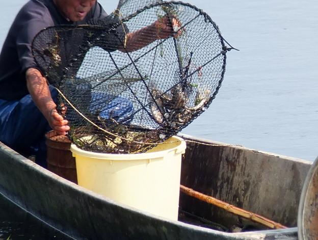 藻屑蟹漁2 おお~~入ってる♪