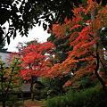『深秋。。。』