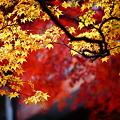 『秋の彩り。。。』
