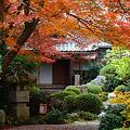 写真: 『秋路。。。』