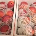 写真: 札幌でアップルマンゴー