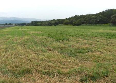石狩羊牧場−農地