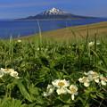 写真: 花の浮島 2