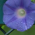 Photos: 秋の紫2