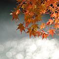 Photos: 晩秋の煌めき。