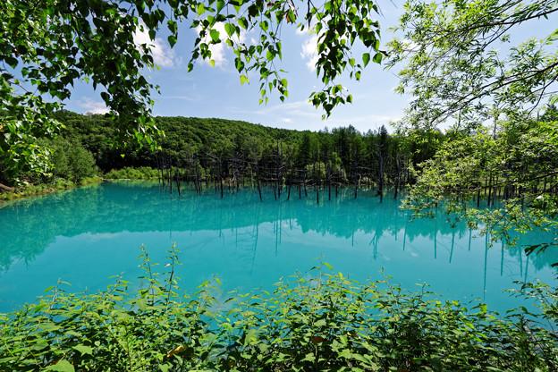 森と泉にかこまれて