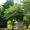 夏の木陰で (1)