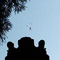 写真: 晴れ時々、蜘蛛