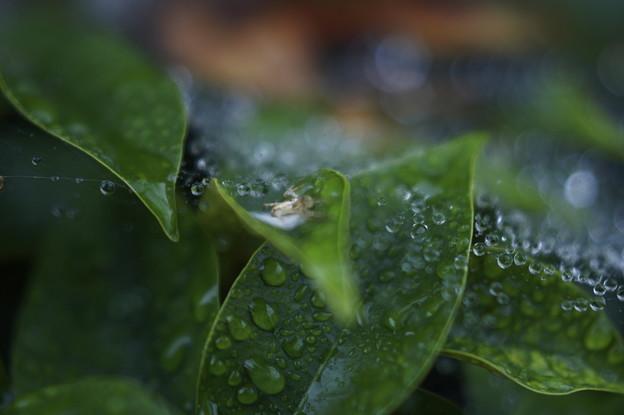 雨の楽しみは