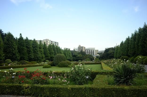 Photos: ちょっと期待外れだった西洋庭園