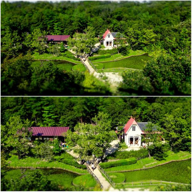 愛・地球博記念公園:「サツキとメイの家」 No - 34(展望塔から見下ろした建物、ミニチュアライズ)