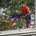 東山動植物園(2015年9月)No - 75:アカコンゴウインコ