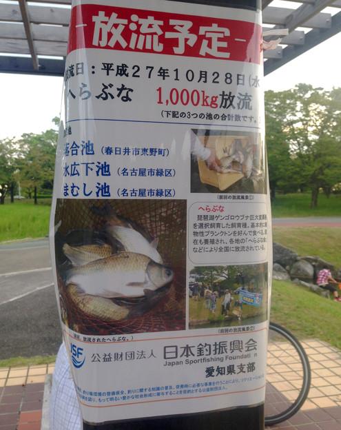落合公園:来月(10/28)落合池に「ヘラブナ」放流予定