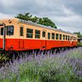 ローカル列車とラベンダー