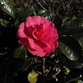 Photos: Flower01202012Lumia800