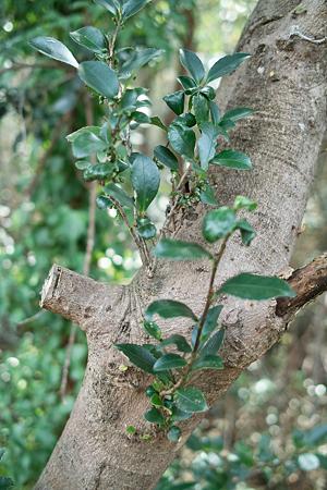 Trees03072012dp2-02