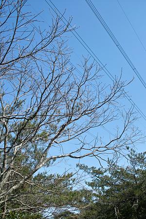 tree03142012dp2-03