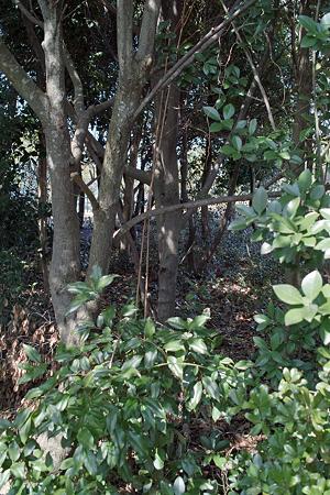 trees03262012dp2-02