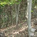 Photos: trees04022012dp2-01