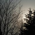 Photos: Trees04082012sd15-04