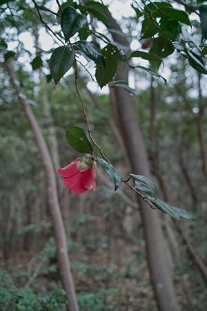 Flower04092012dp2-04