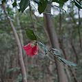 Photos: Flower04092012dp2-04
